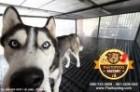 18196306 ซื้อขายเช็คราคา สุนัข กรุงเทพมหานคร มีนบุรี