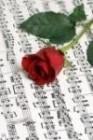 17768709 ซื้อขายเช็คราคา ดนตรี/ บันเทิง นนทบุรี เมือง