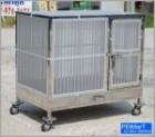 17181055 ซื้อขายเช็คราคา สุนัข กรุงเทพมหานคร มีนบุรี