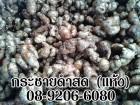 13875678 ซื้อขายเช็คราคา ขายตรง/ อาหารเสริม ปทุมธานี ธัญบุรี