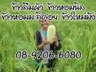 13007092 ซื้อขายเช็คราคา ธุรกิจการเกษตร เพชรบูรณ์ เขาค้อ